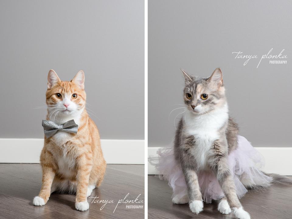 indoor pet photography