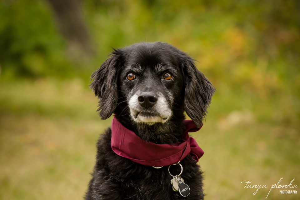 Francine & Clayton, Edmonton dog on wedding day