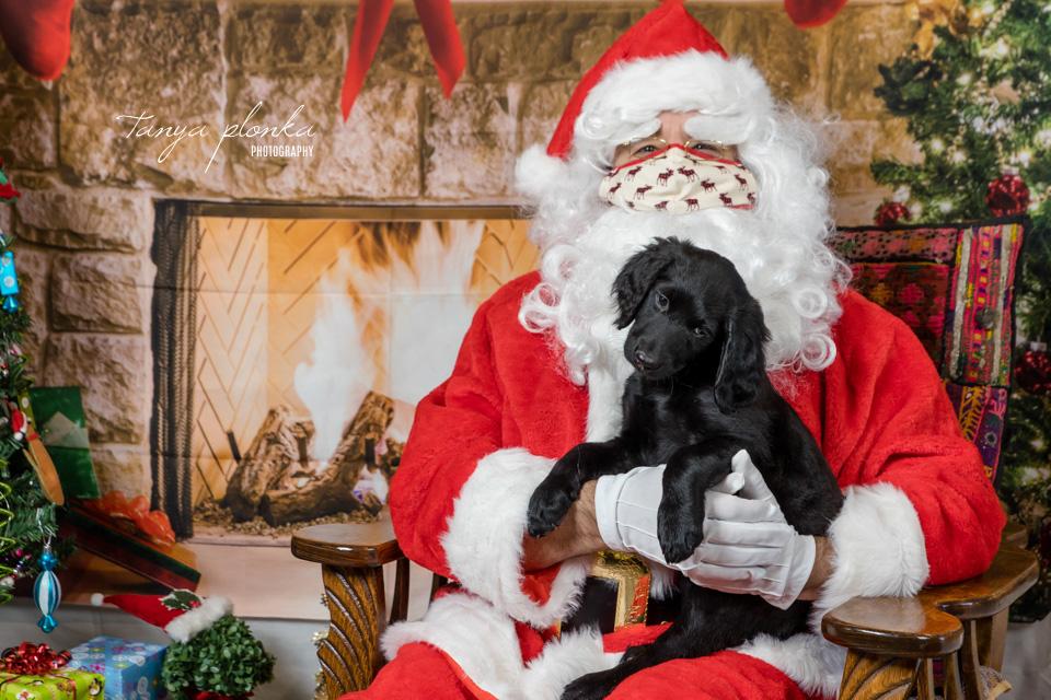 Lethbridge Christmas pet photos with Santa