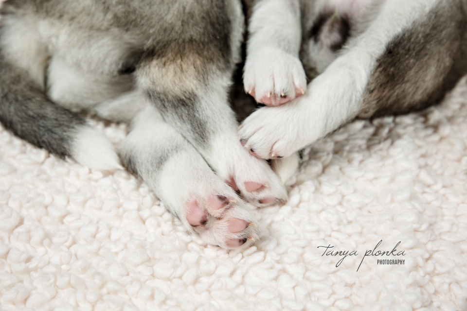 Lethbridge pet photography