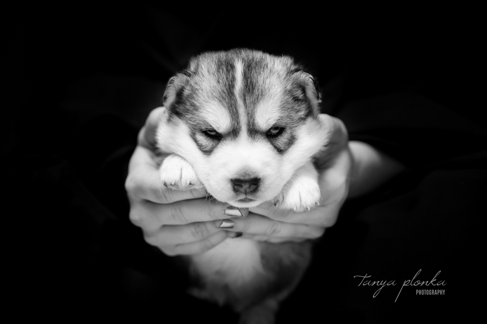 Lethbridge newborn puppy photos