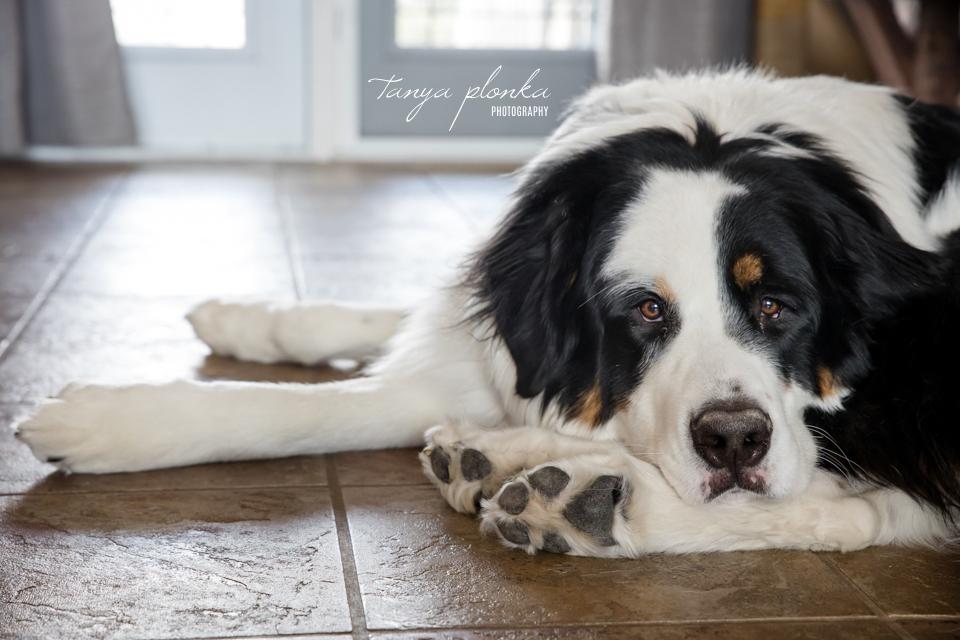 Lethbridge dog photoshoot