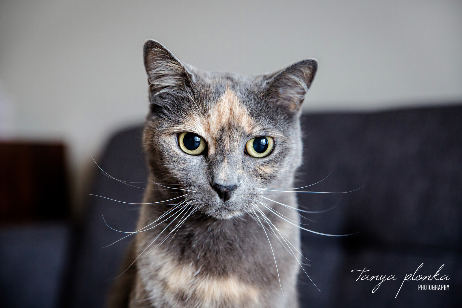 gray and tan cat with big whiskers looking at camera with large eyes