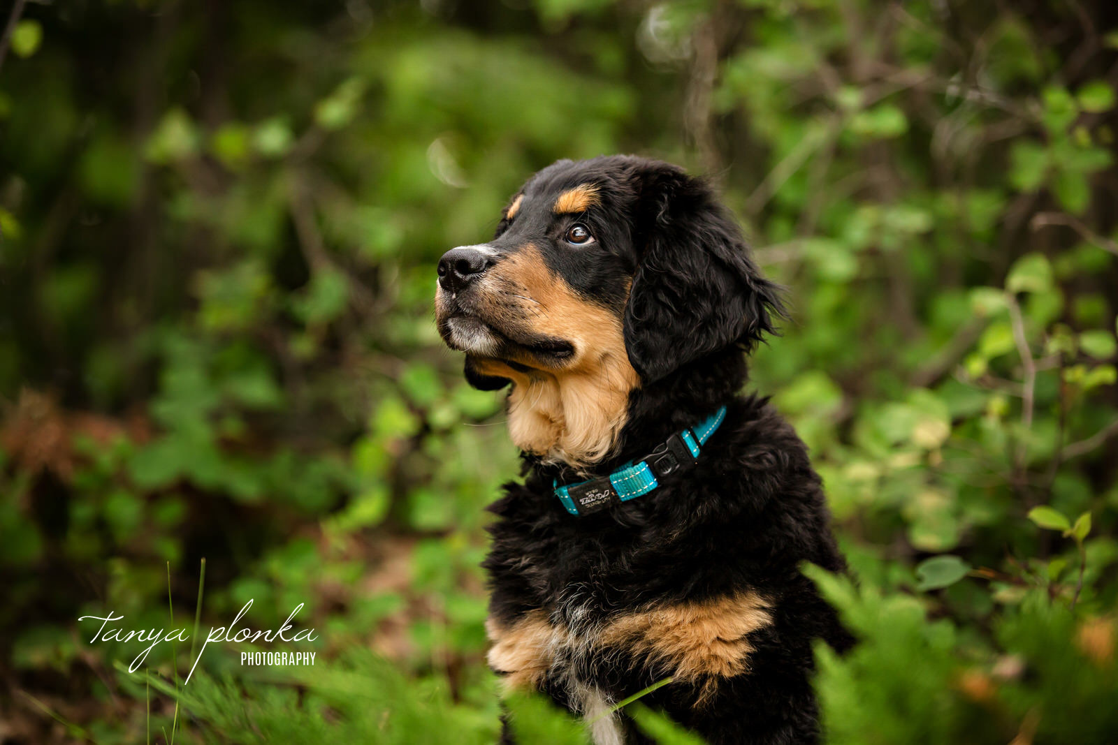 black and tan puppy looking to left while sitting in green leaves