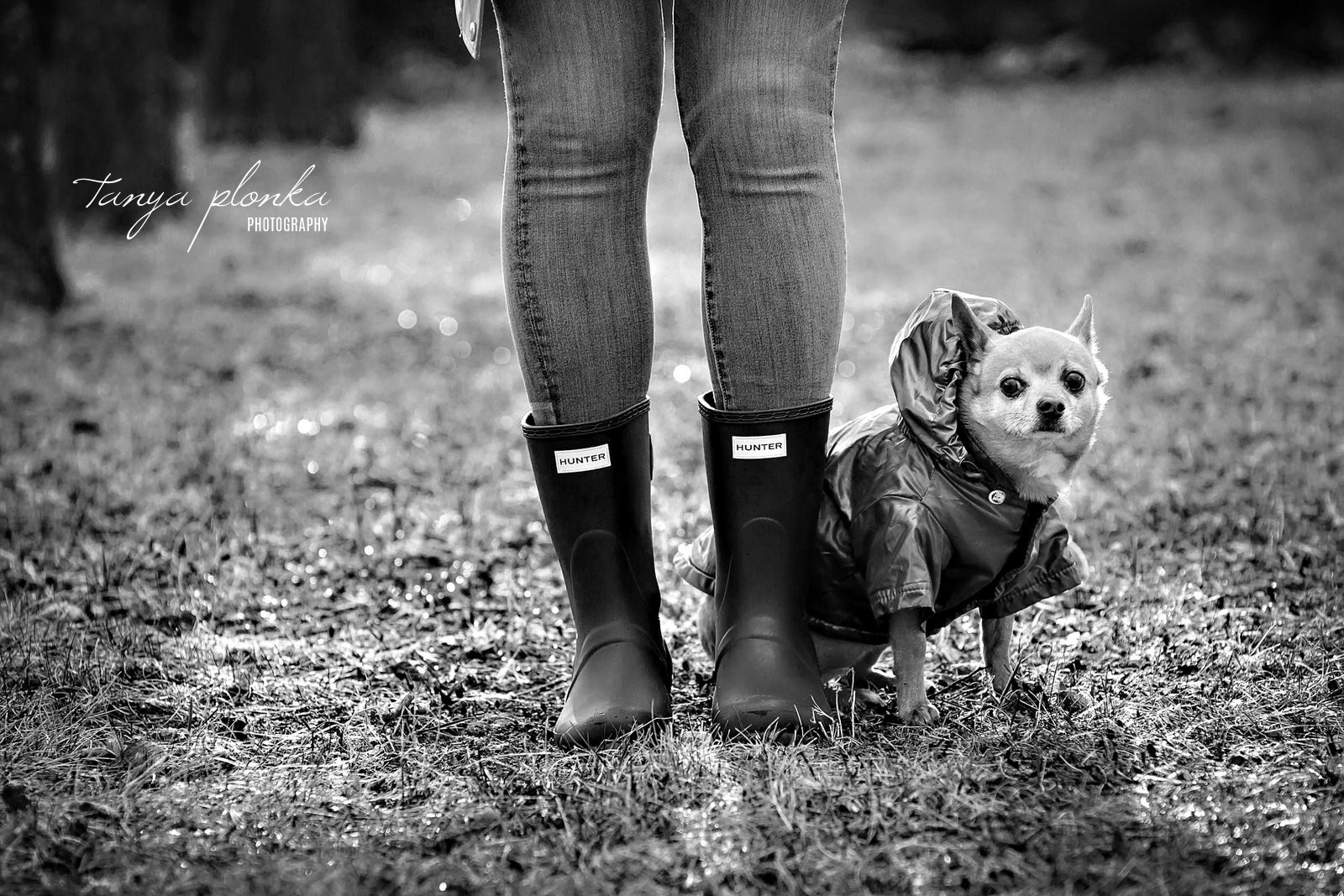 black and white photo of chihuahua wearing raincoat standing next to owner's boots