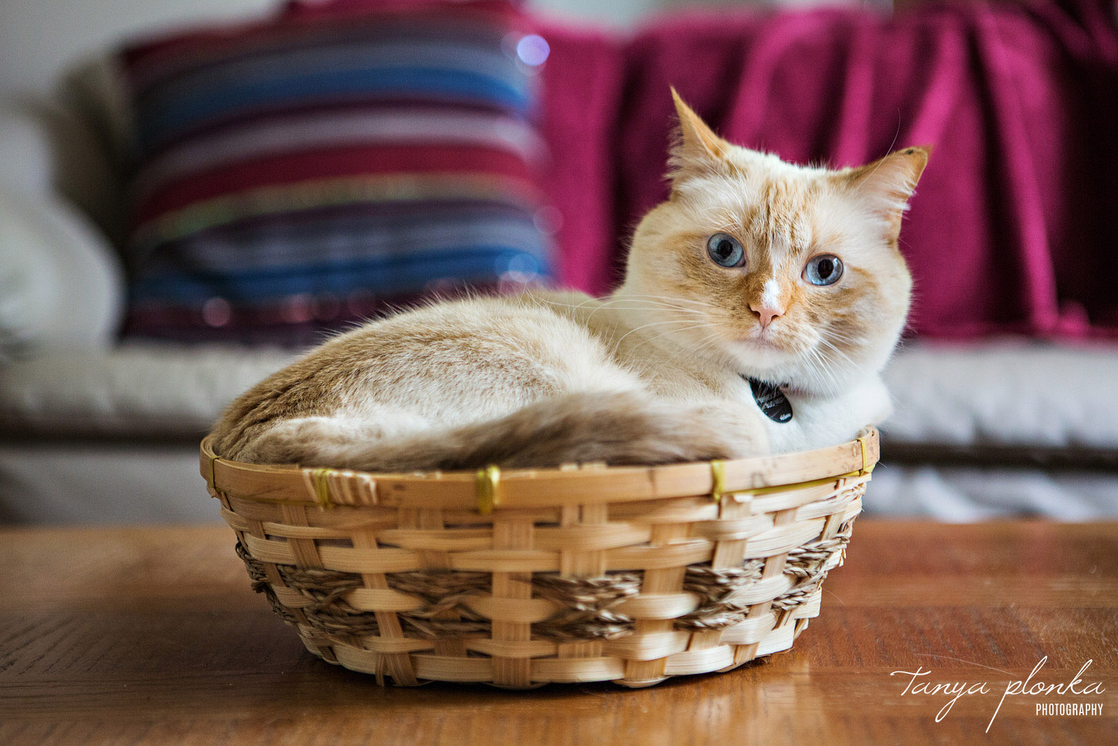 small white and brown cat sits in a basket