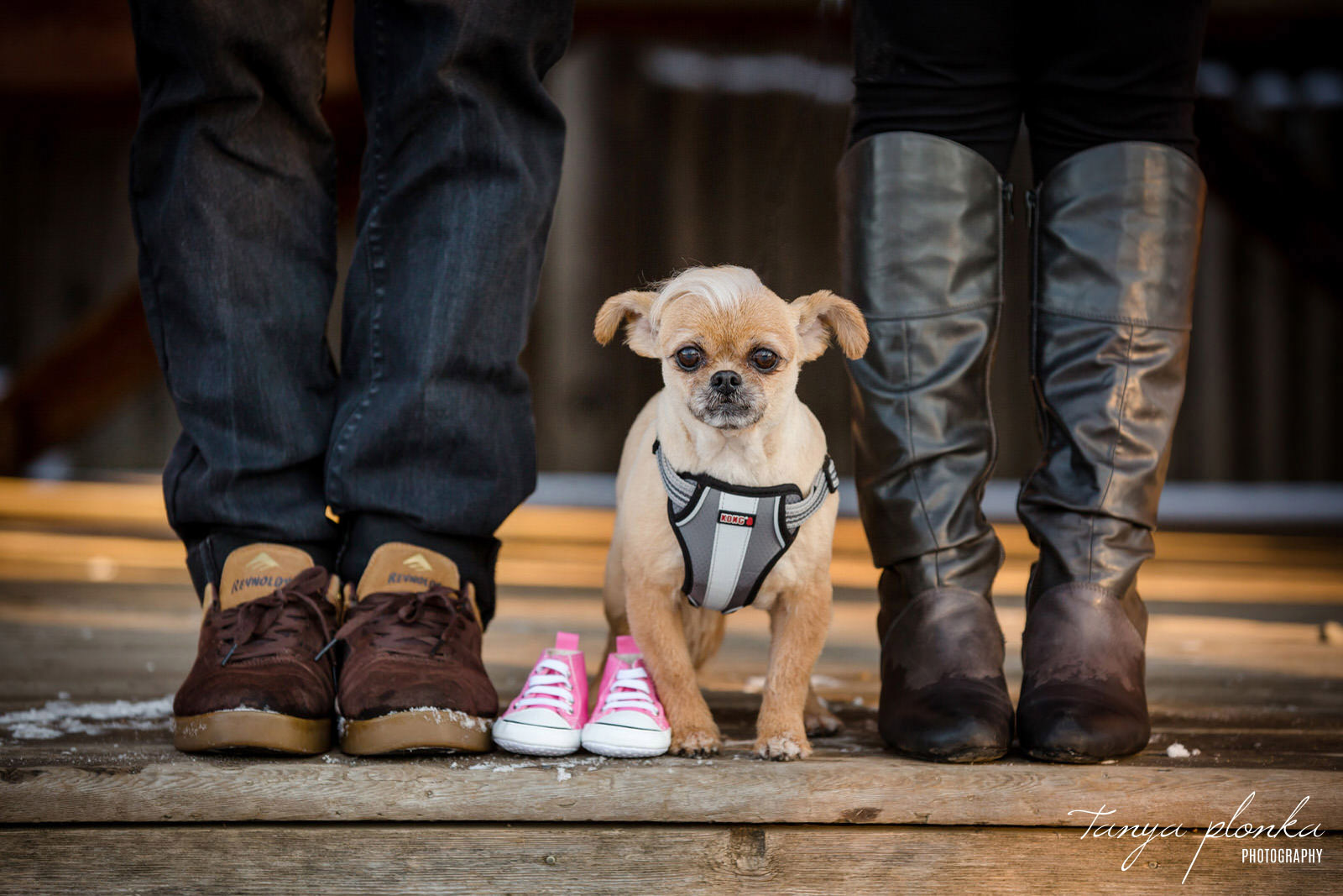 closeup of people's feet in shoes with small dog in middle and pink baby shoes