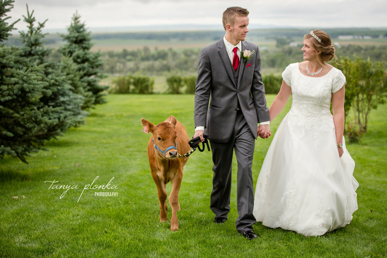 bride and groom walking while looking at each other with a small cow on a leash