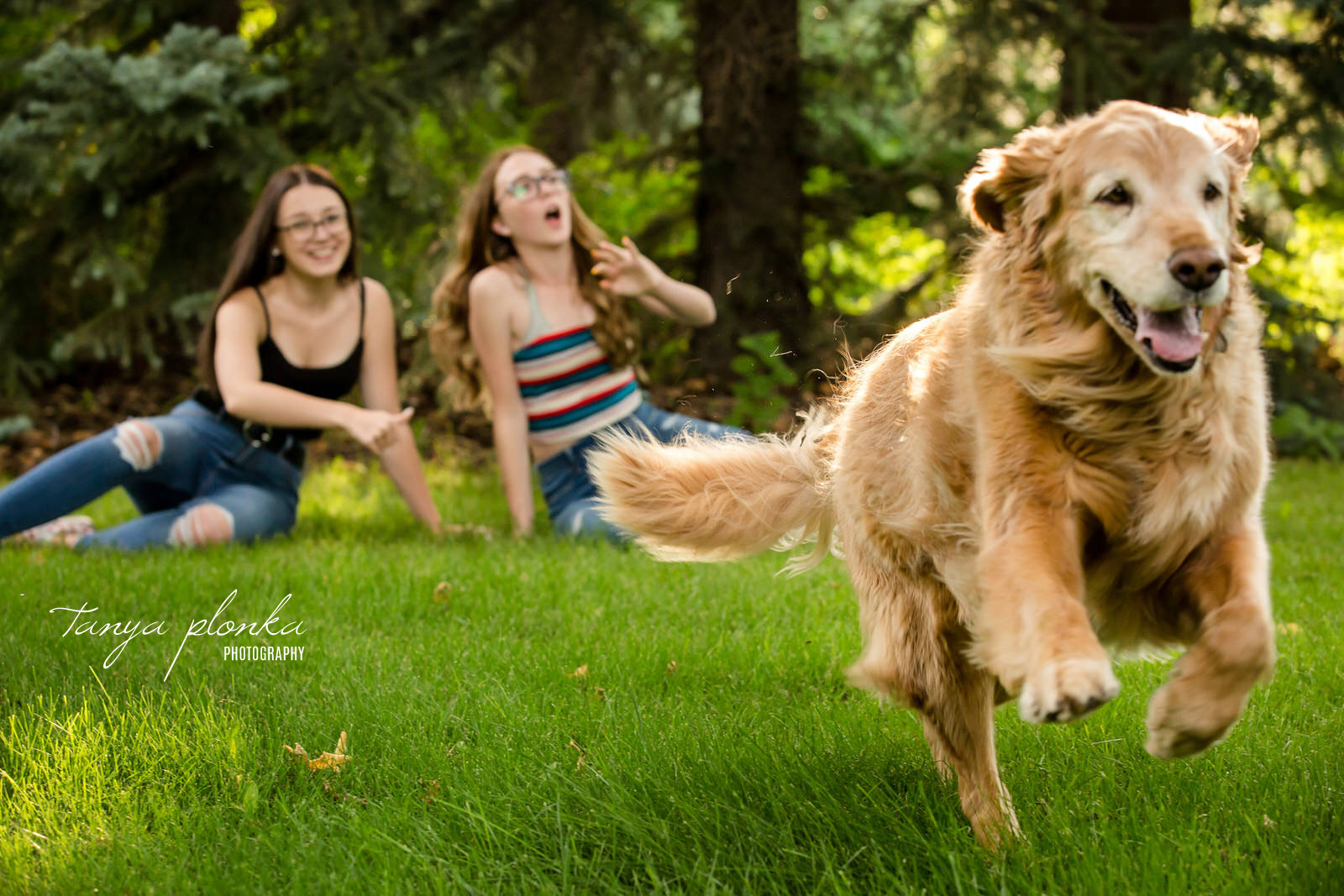 golden retriever runs towards camera while girls in background look surprised