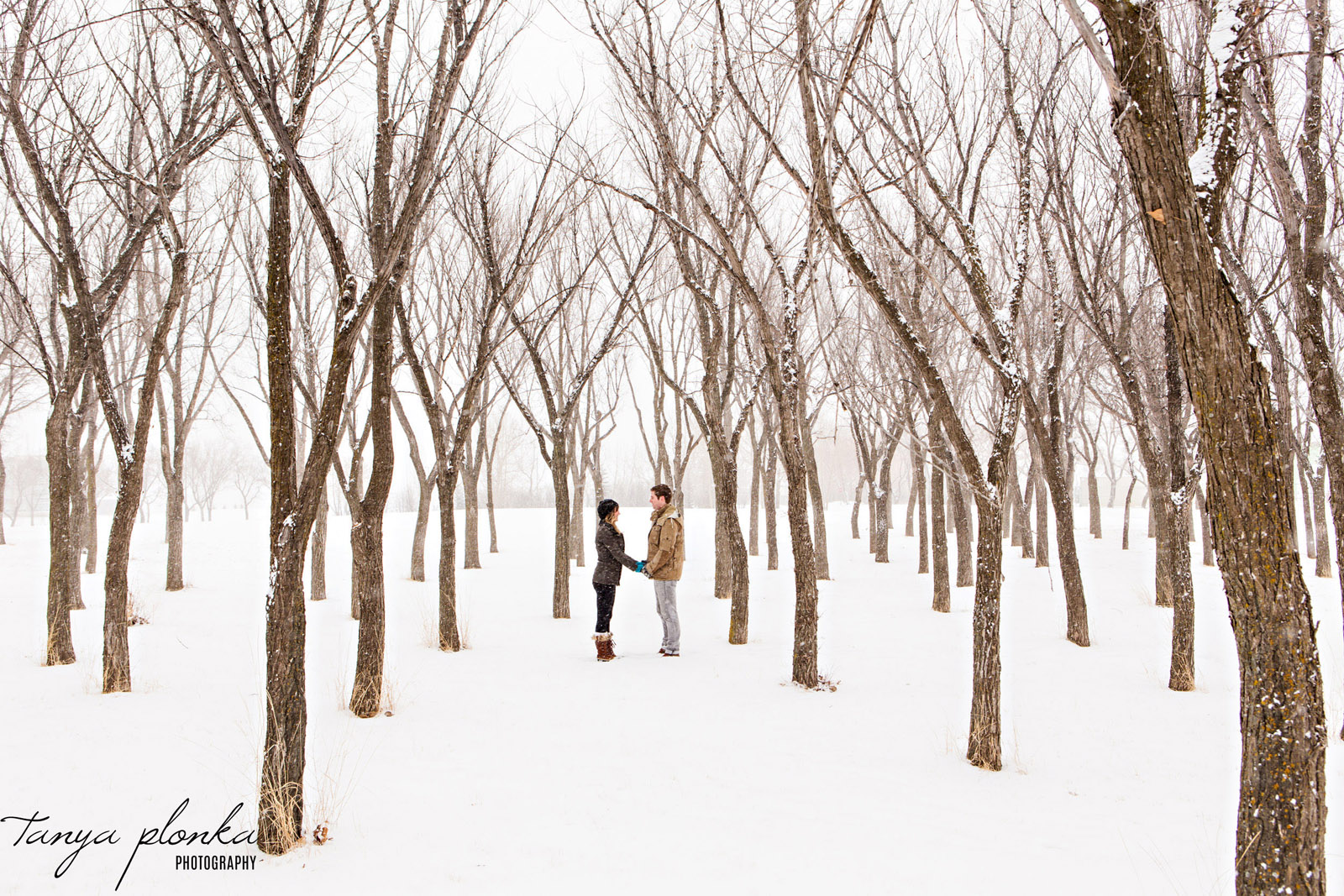 couple hold hands in wide patch of trees in snowy winter scene