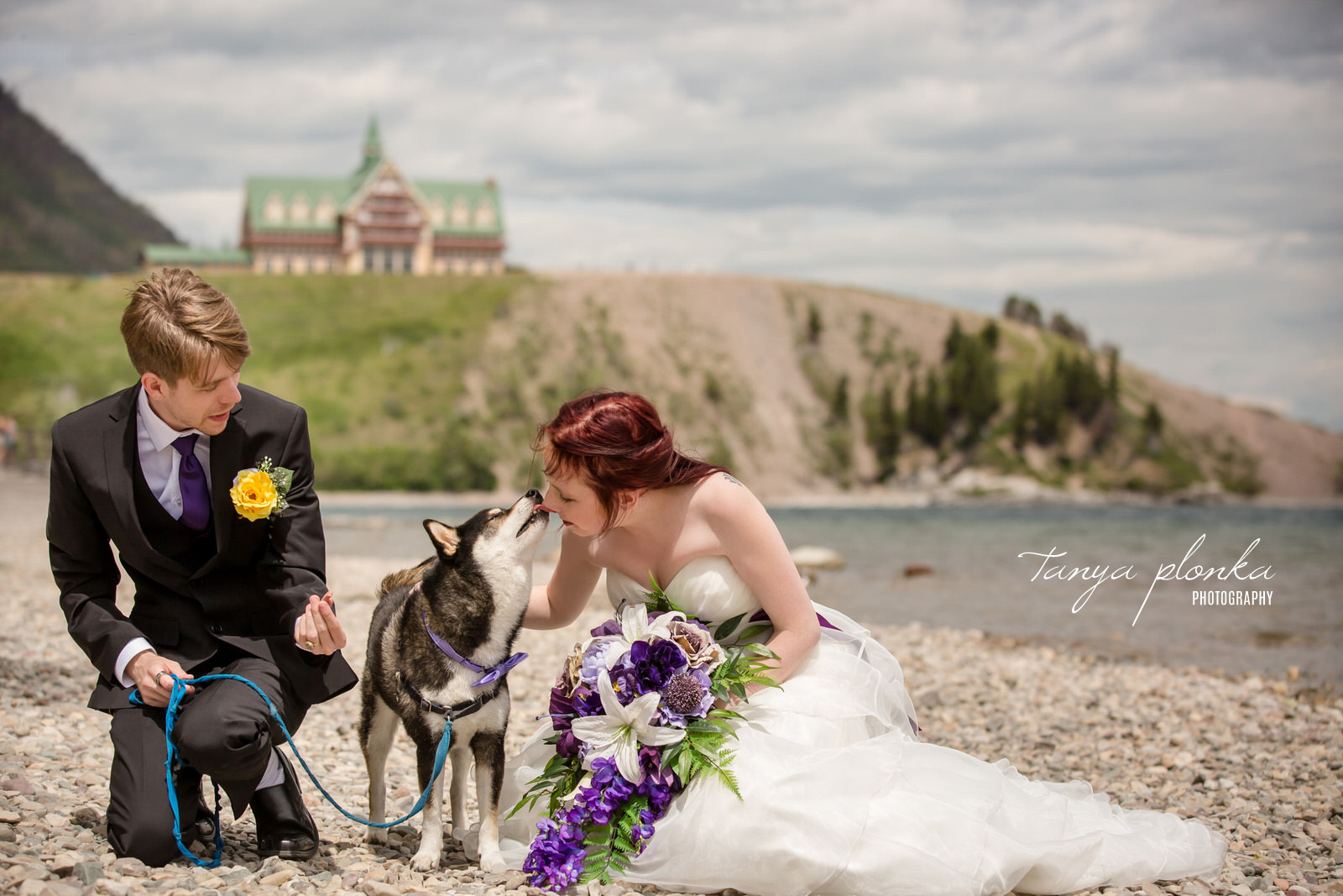 dog standing between couple licks bride's nose